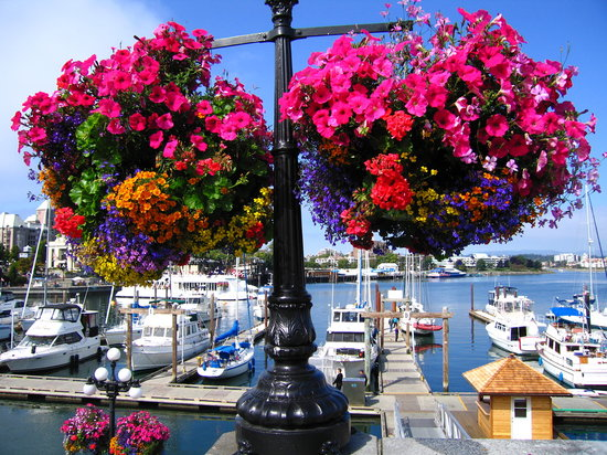 victoria-in-bloom